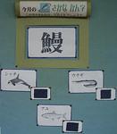 さかな漢字クイズ1jpg.JPG