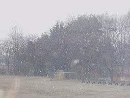 はるの雪jpg.JPG