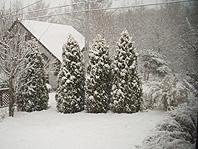 雪景色庭.jpg