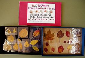 葉っぱあてクイズ.jpg