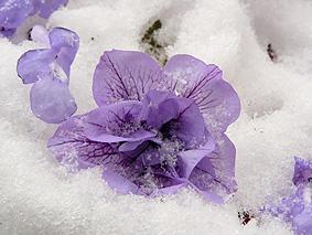 雪かべんjpg.JPG
